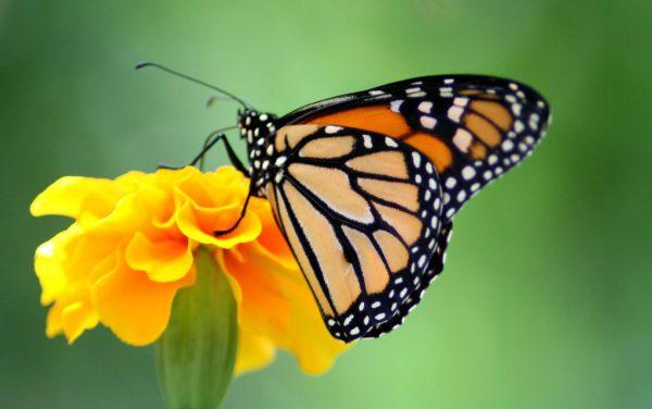 Приказна за пеперутката