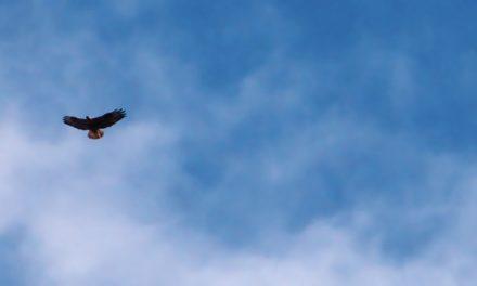Монах Симеон Светогорец – Птици небесни
